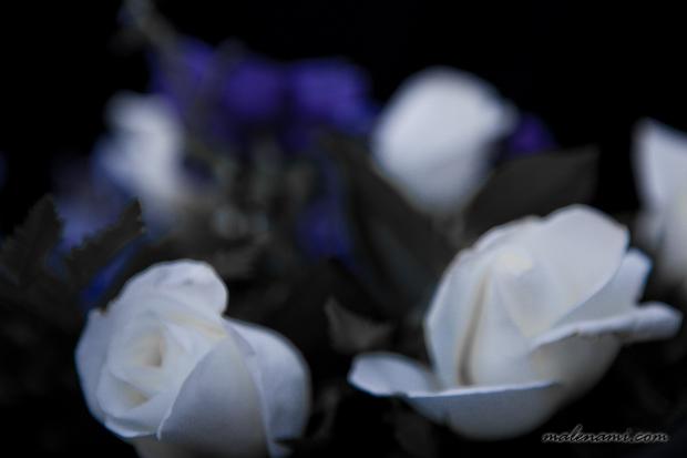 begravning-10