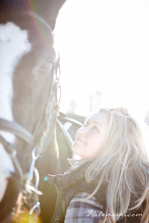 horse-1585