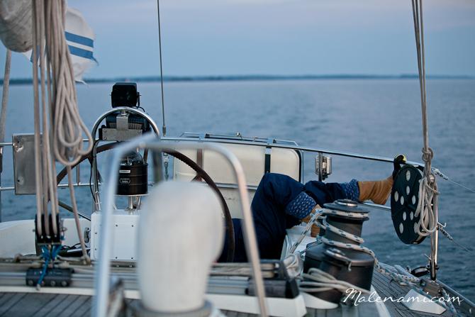 swan-sailing-0222