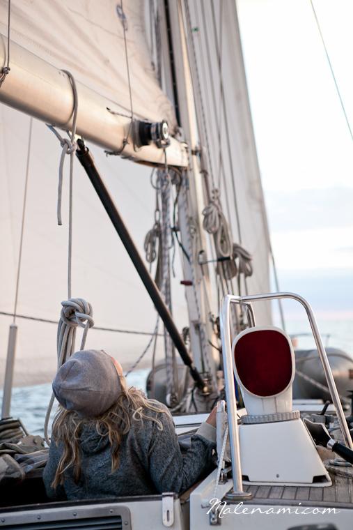 swan-sailing-0266