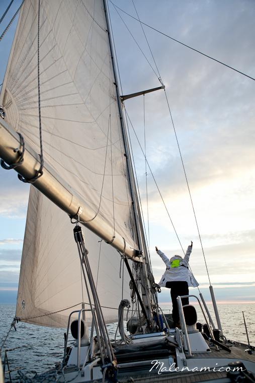swan-sailing-0282