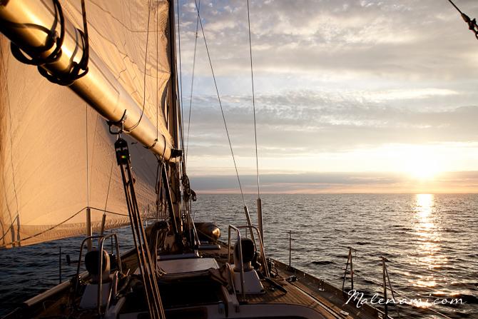 swan-sailing-0292