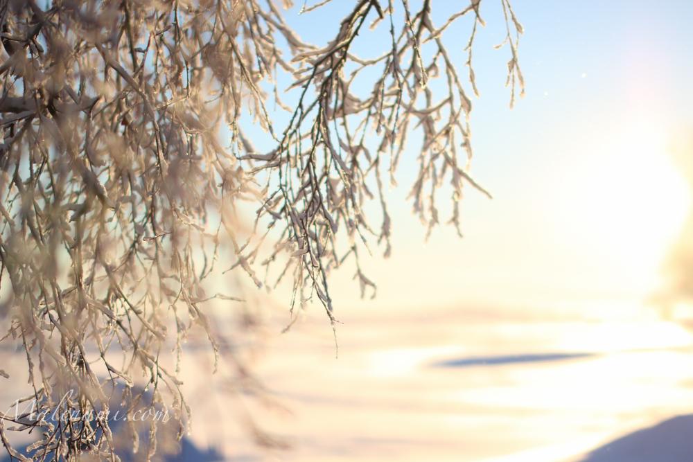 snow-2893