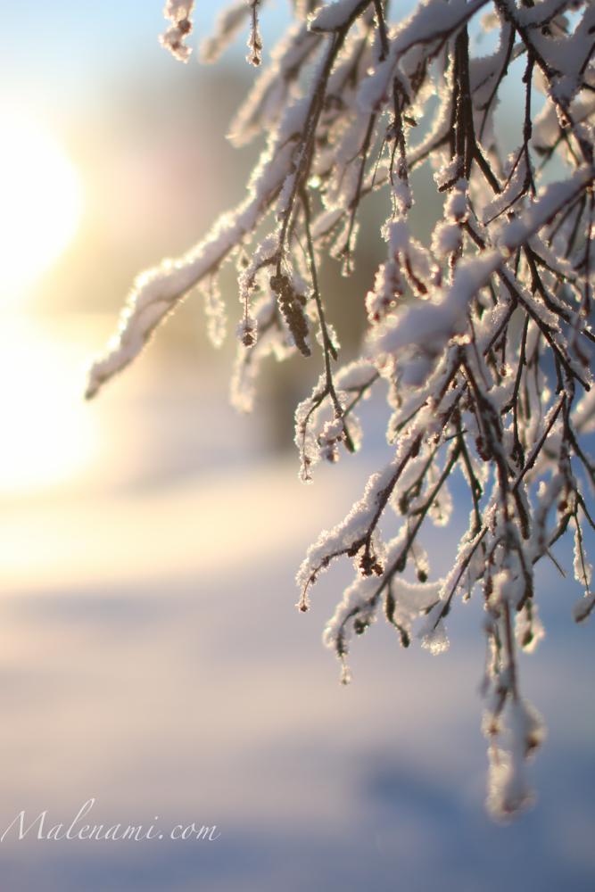 snow-2915